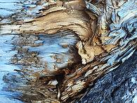 Tronco de árvore seca