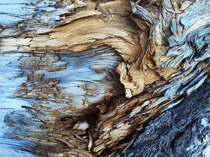 Tronc d'arbre sec