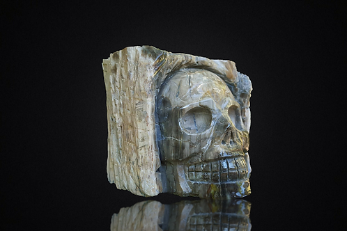 Crâne en Bois pétrifié 1,72 kilo