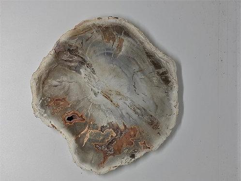 Bois Fossile et Agate 10cm