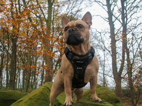 Dog Harness - NO PULL