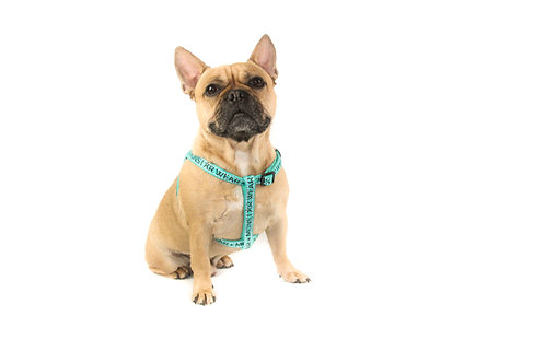 Teal Step in Harness