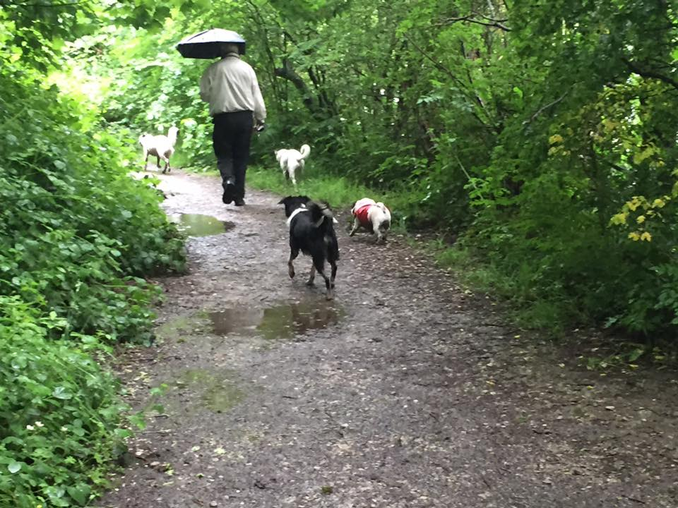 Walks on a rainy day