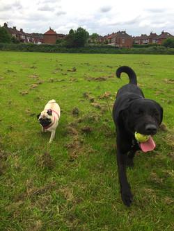 Lola and Harvey