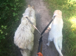 Duke and Mable on a paceful walk