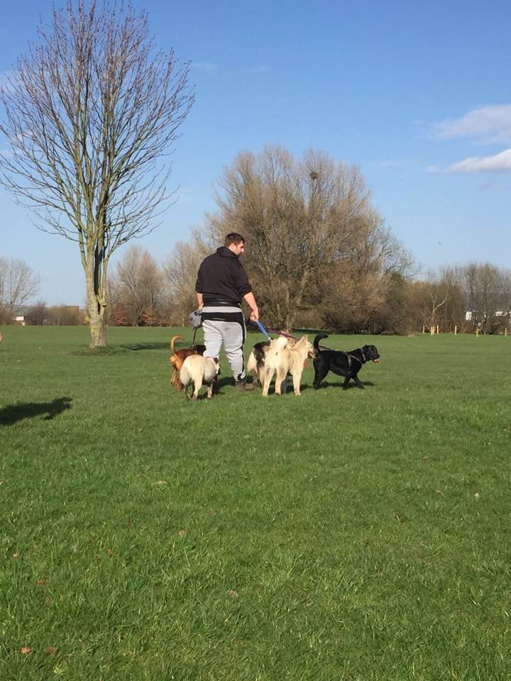 Jamie walking several dogs