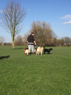 Jamie walking several dogs