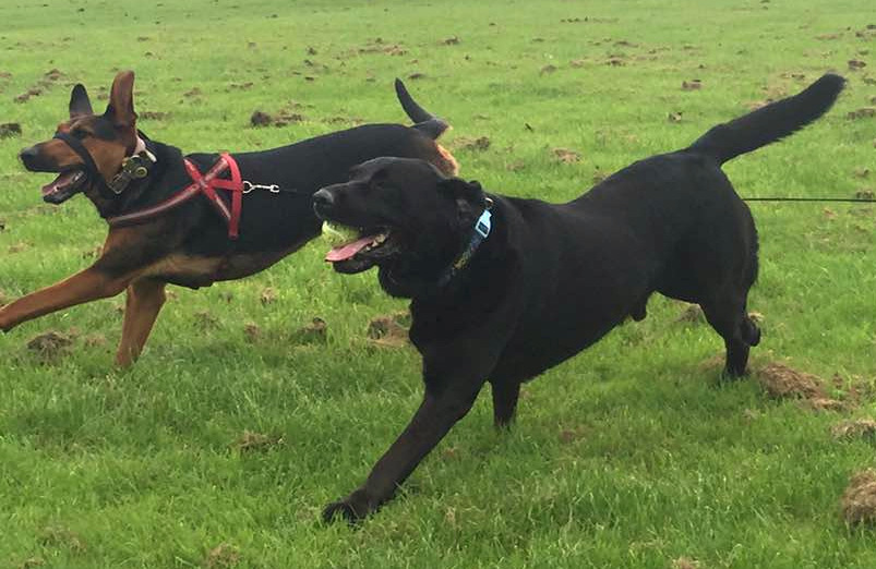Kira and Harvey running on a field