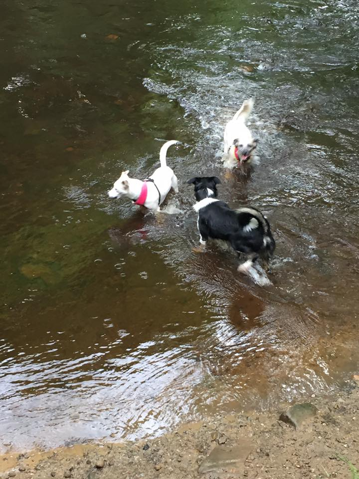 Dipping their paws in the stream