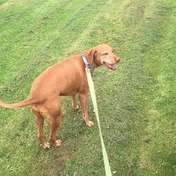 Zeus loving his walk