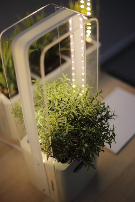 Urządzenie do uprawy hydroponicznej