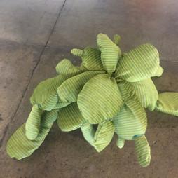 St. Augustine Cactus 2016