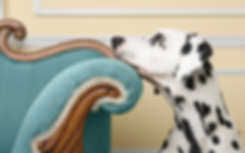 Spot the dalmation focused on a better mobile pet groomer experience