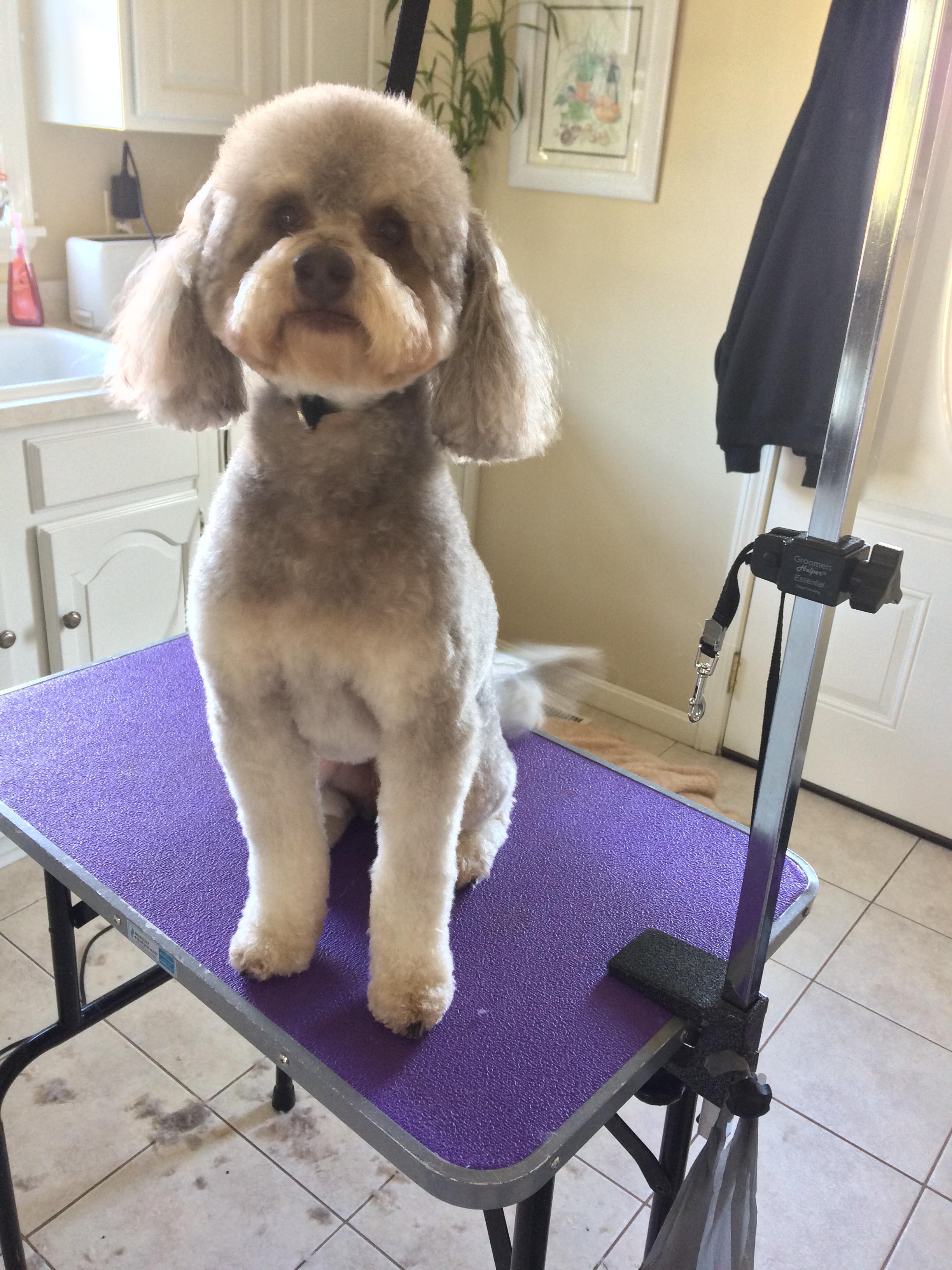 Small Dog All Inclusive Groom