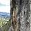 Thumbnail: ESCALADA en roca - Cojitambo