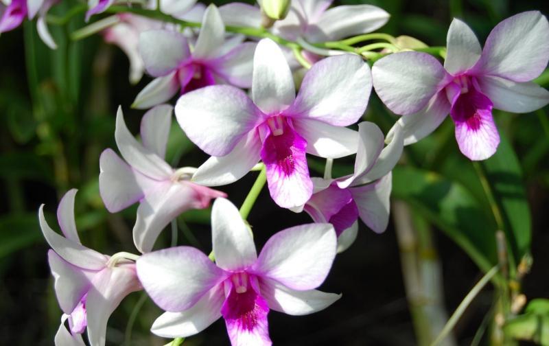 orquideas1