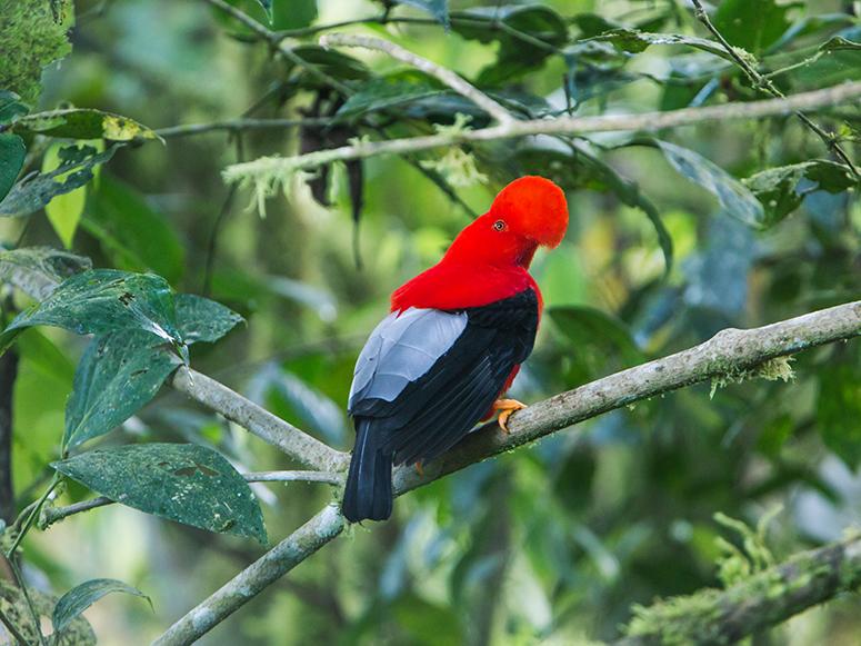 tours de observacion de aves cuenca