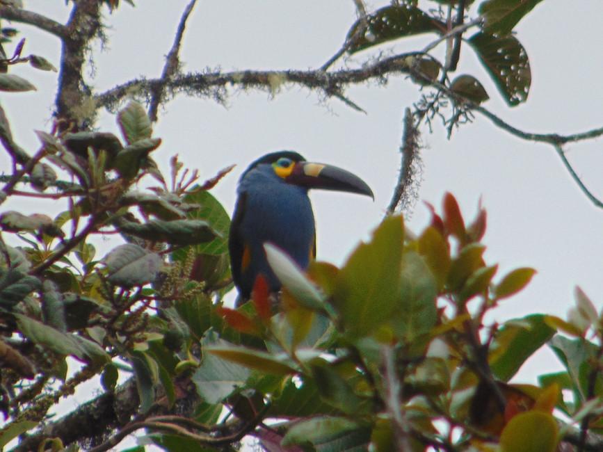 tours de observación de aves en Cuenca- Ecuador