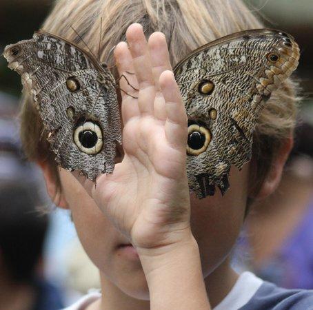 mariposas-de-mindo