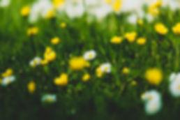 fieldflowers.jpg