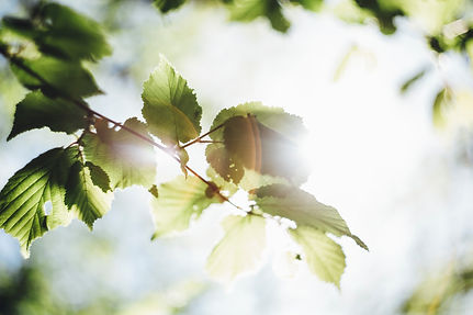 leaves_light.jpg