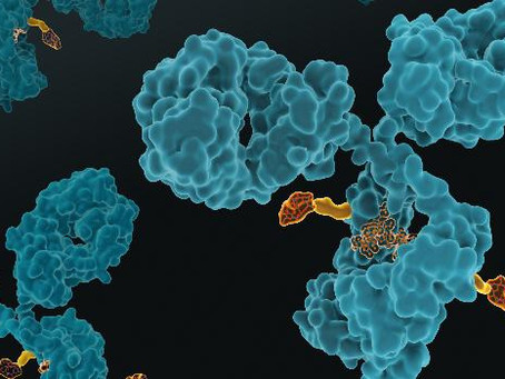 Araris Biotech raises CHF 15.2 million to boost the development of their antibody-drug conjugate