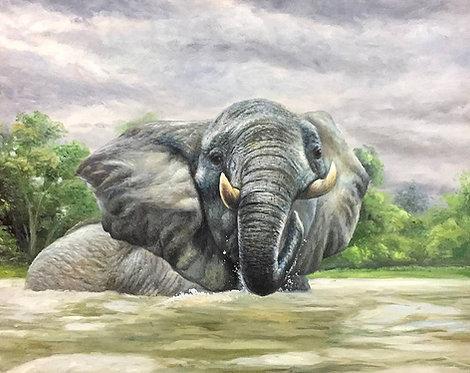 Купающийся слон