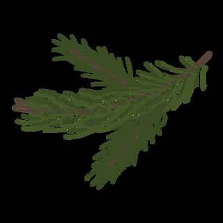 Pine rami di abete 8