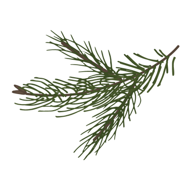 Branches Spruce Pine 8