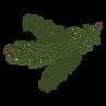 Las ramas de pino Spruce 8