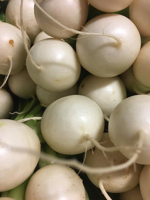 Hakurei Turnips- 10 pck- OG plant