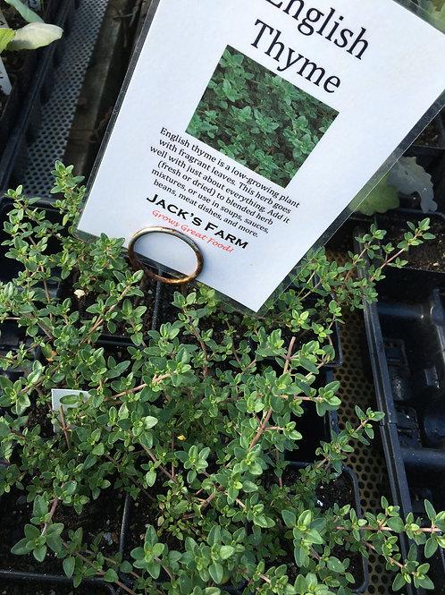 "English Thyme- 2"" pot"