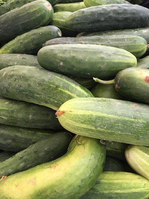 Cucumber, Zuchinni & Melon- choose variety