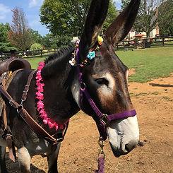 donkey8.jpg