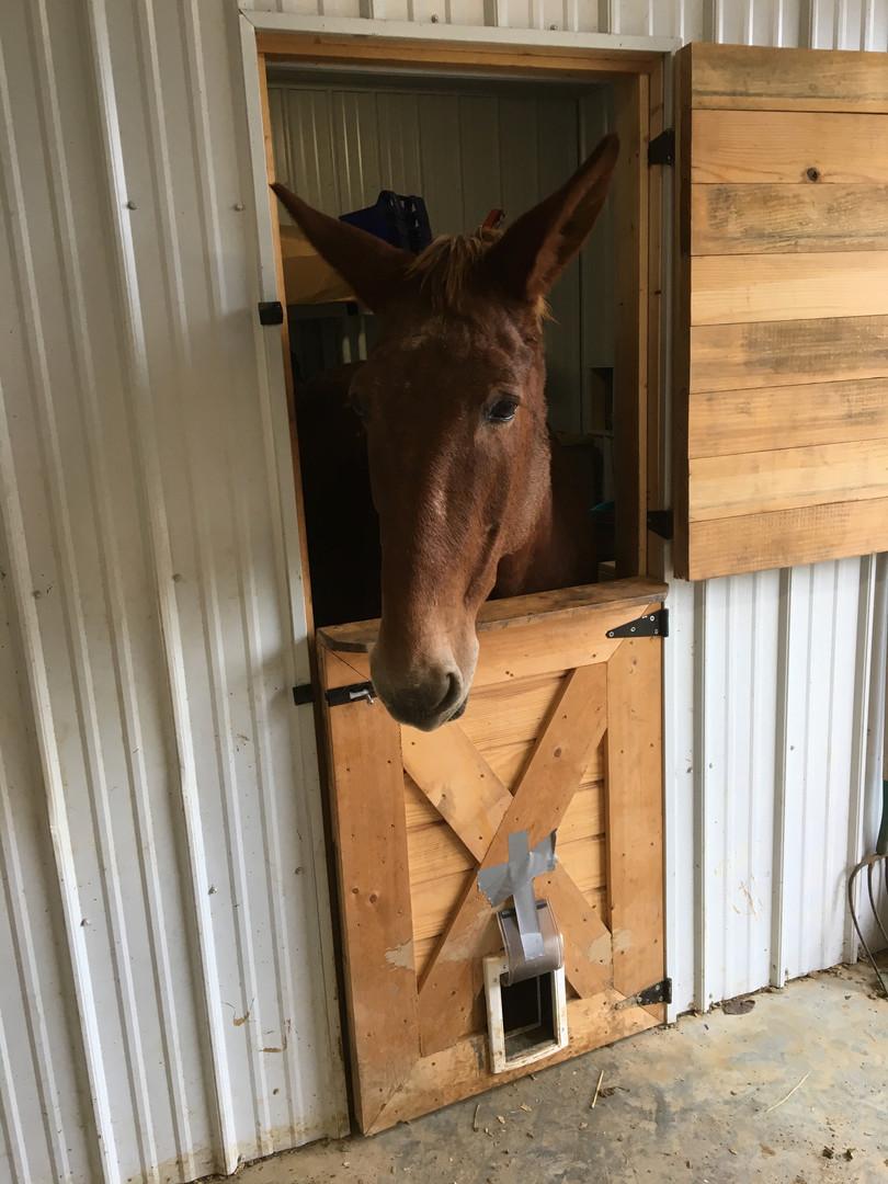 Donkey Meadows Purcellville VA