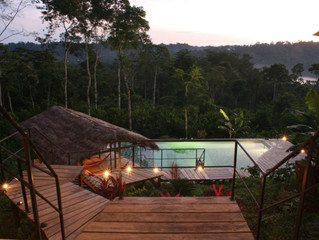 Fancy a visit to the Amazon Jungle?