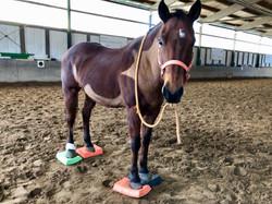 Training mit den Balancepads