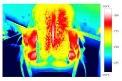 Sattelthermografie