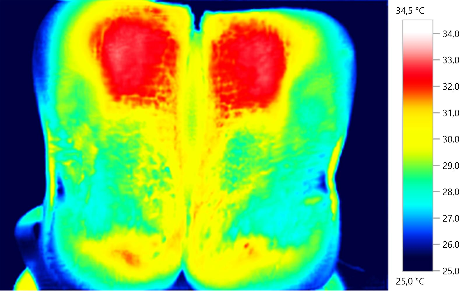 Sattelthermografie-Baumlossattel