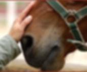 horses-main.jpg
