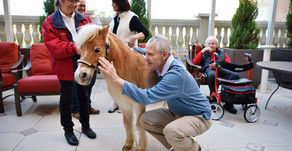 Pint-size Horse Lifts Spirits of Dementia Patients at Park Cities Home