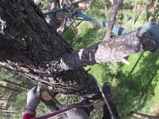 zip line pine