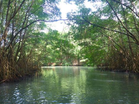 mangrove-moule.jpg