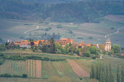 2021-04-28 Sigolsheim - Galtz-3