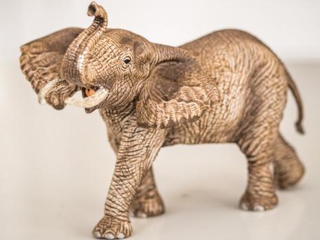 Elephant safari-2.jpg