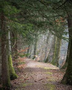 2021-02-26 Vosges - Hadol-11.jpg