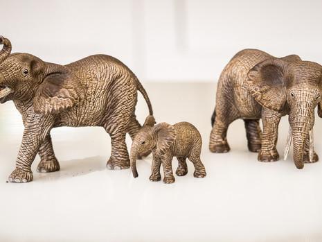 Elephant safari-1.jpg