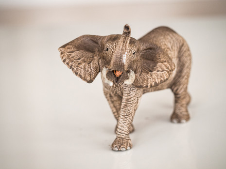 Elephant safari-3.jpg