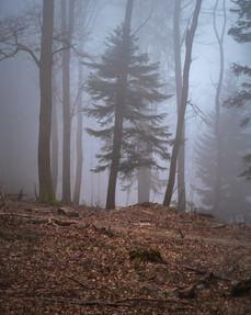 2021-02-26 Vosges - Hadol-21.jpg