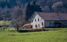 2021-02-28 Vosges - Forêt mousses-11.jpg